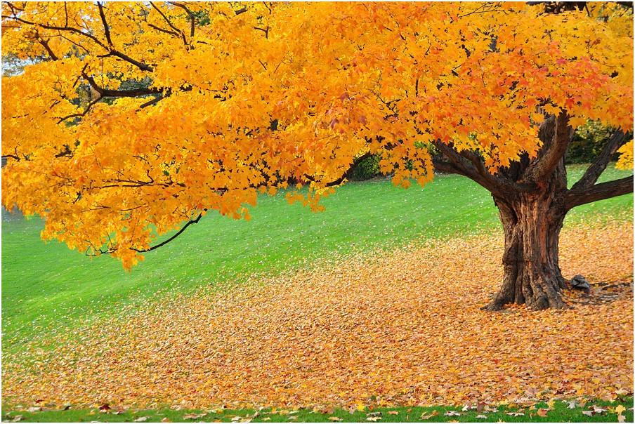 photo Autumn colors