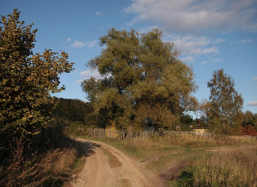 """фото """"Вечерняя дорога ."""" метки: пейзаж, осень"""
