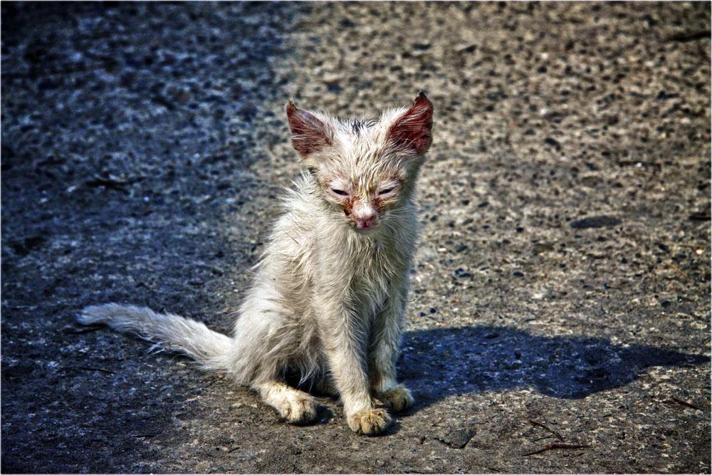 единственный бездомный котенок фото подумала