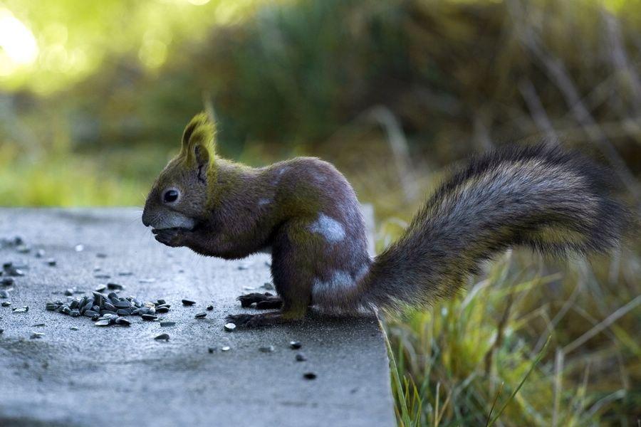 """фото """"Иногда они приходят"""" метки: природа, дикие животные"""