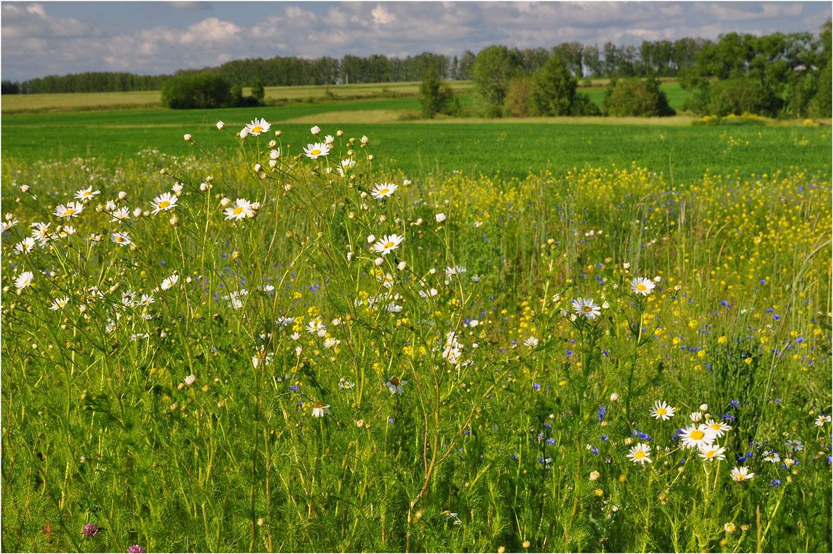 "photo ""***"" tags: landscape, nature, flowers, summer"