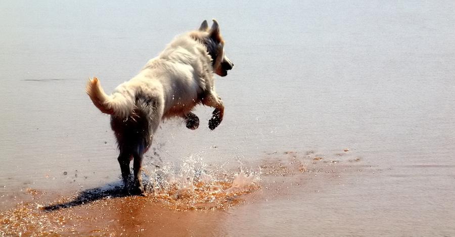 "фото """"A Friend of mine... that loves the Sea..."""" метки: природа, домашние животные"