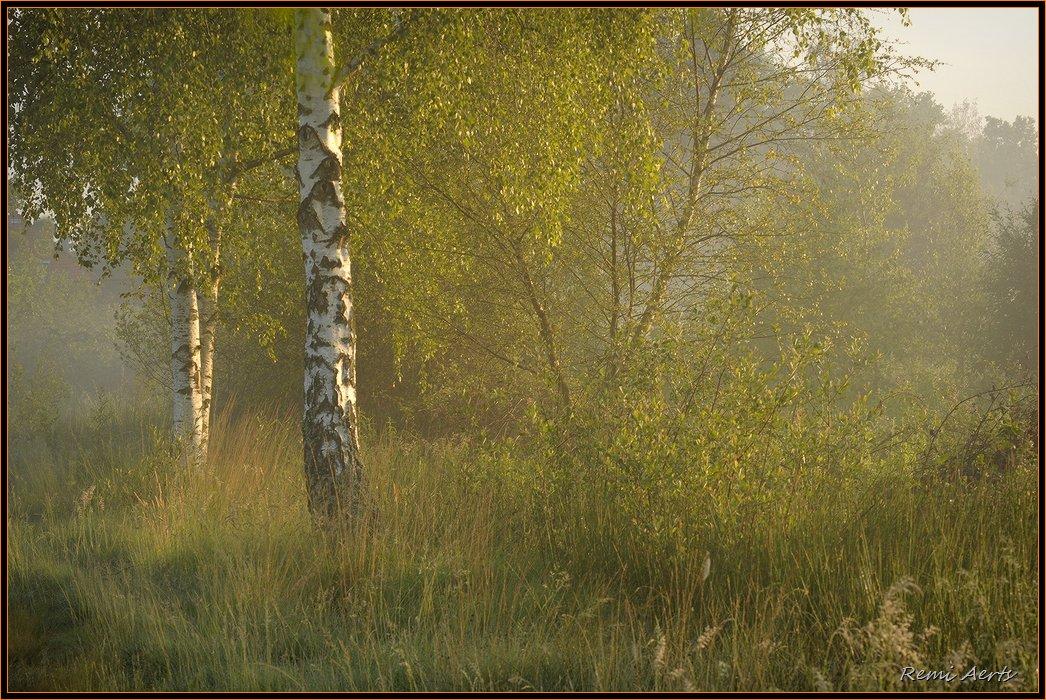 """фото """"nice day"""" метки: пейзаж, лес, лето"""
