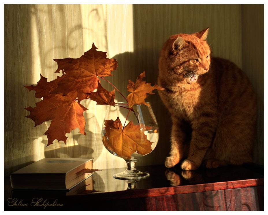 """фото """"Я вам песенку спою..."""" метки: природа, домашние животные"""