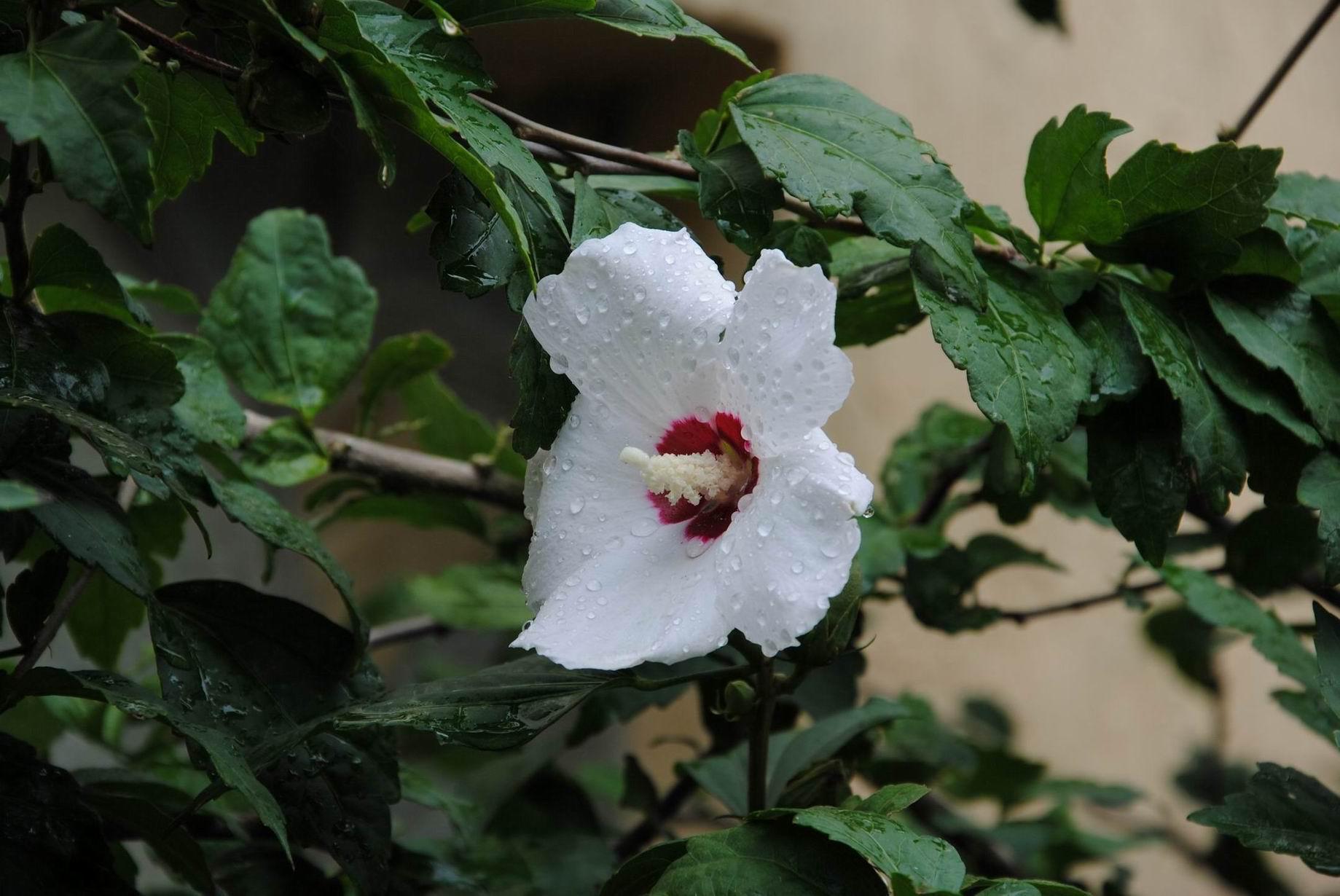 """фото """"Роса на цветке"""" метки: природа, цветы"""