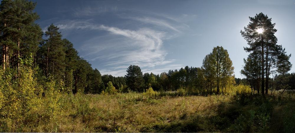 "фото ""Опушки..."" метки: пейзаж, лес"