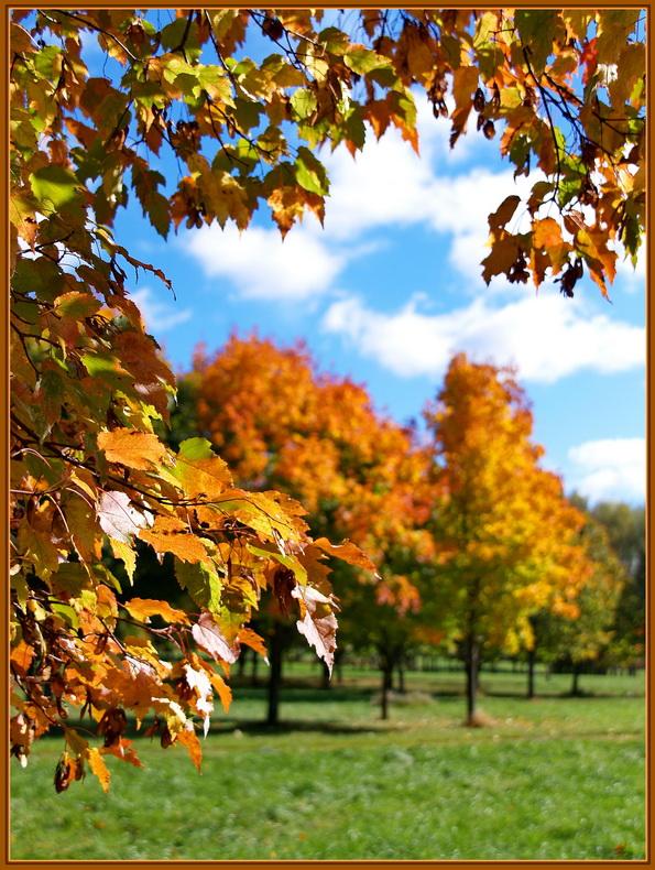 """фото """"Осенний этюд."""" метки: пейзаж, осень"""
