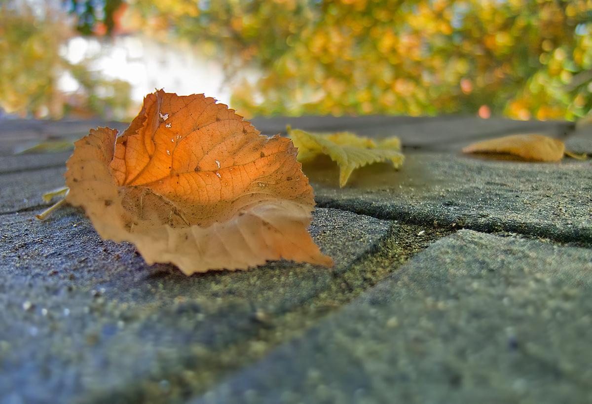 "photo ""Golden autumn."" tags: nature, flowers"
