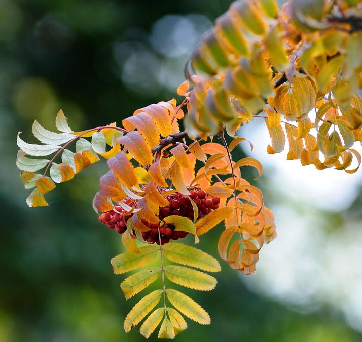 """фото """"*"""" метки: природа, цветы"""