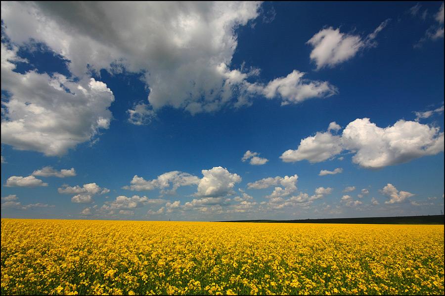 """фото """"Last spring"""" метки: пейзаж, весна, небо, облака, поле"""