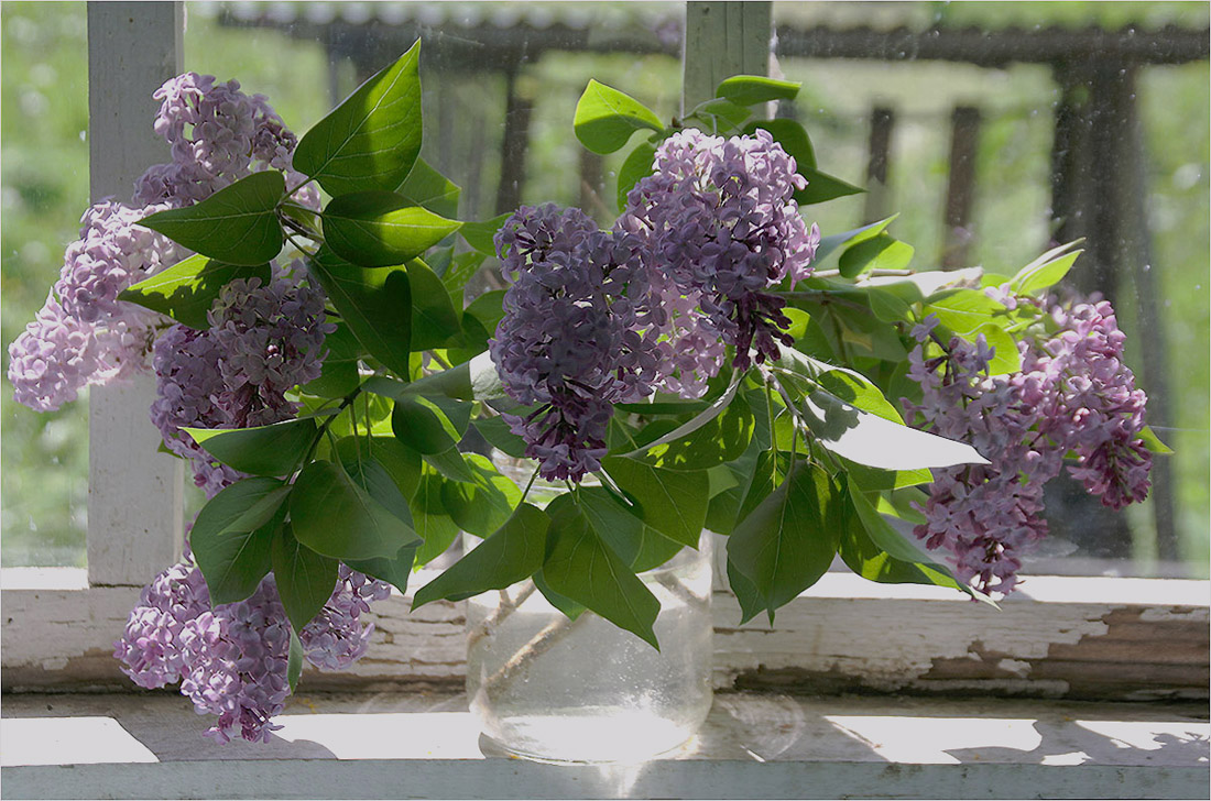 """фото """"Сирень на старом окне"""" метки: натюрморт, природа, цветы"""