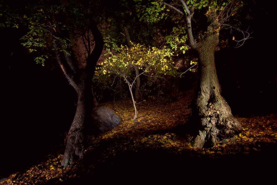 """фото """"Сказочный Лес"""" метки: пейзаж, ночь"""