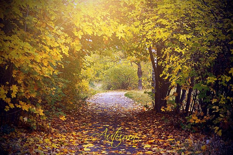 "фото ""Золотая осень."" метки: ,"