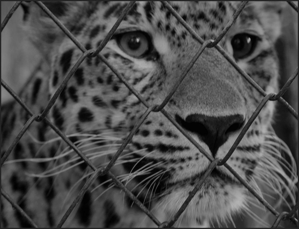 """фото """"SOS"""" метки: черно-белые,"""