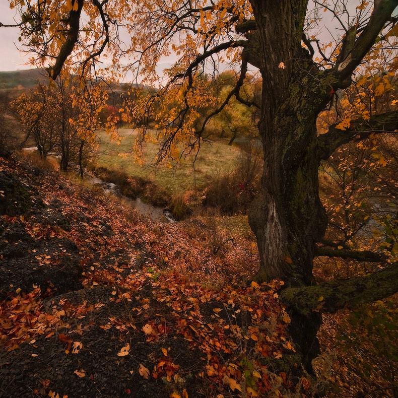 """фото """"Рыжая пора-II"""" метки: пейзаж, осень"""