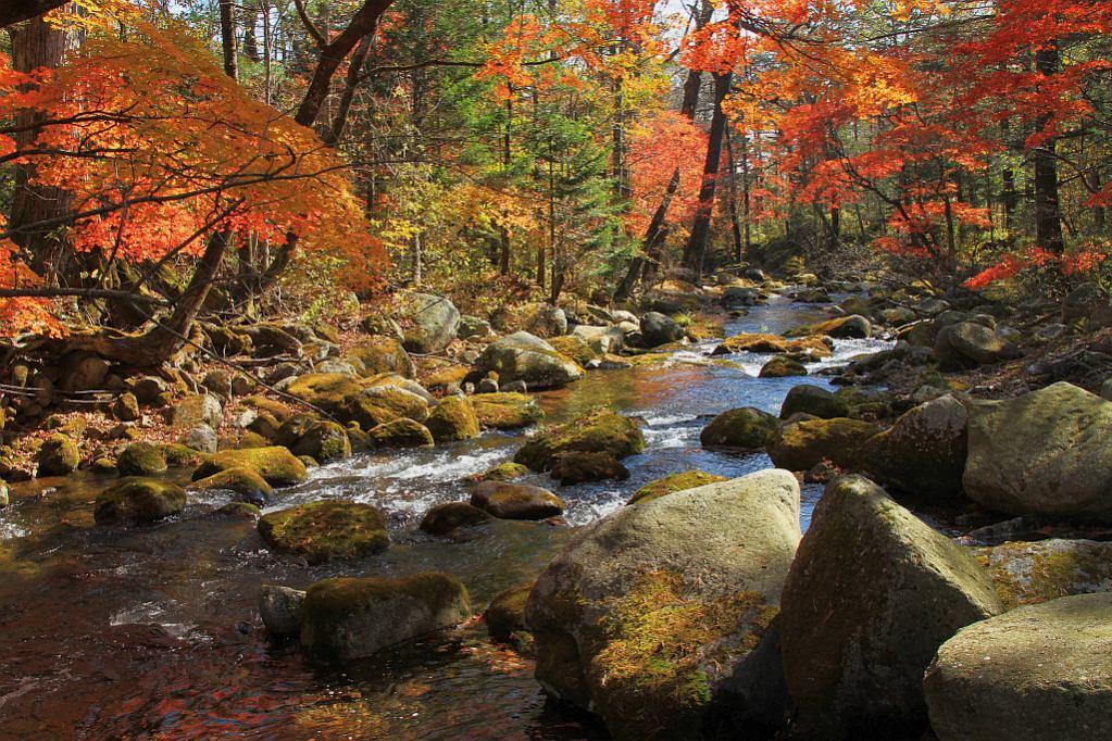 """фото """"В гостях у приморской осени"""" метки: пейзаж, осень"""