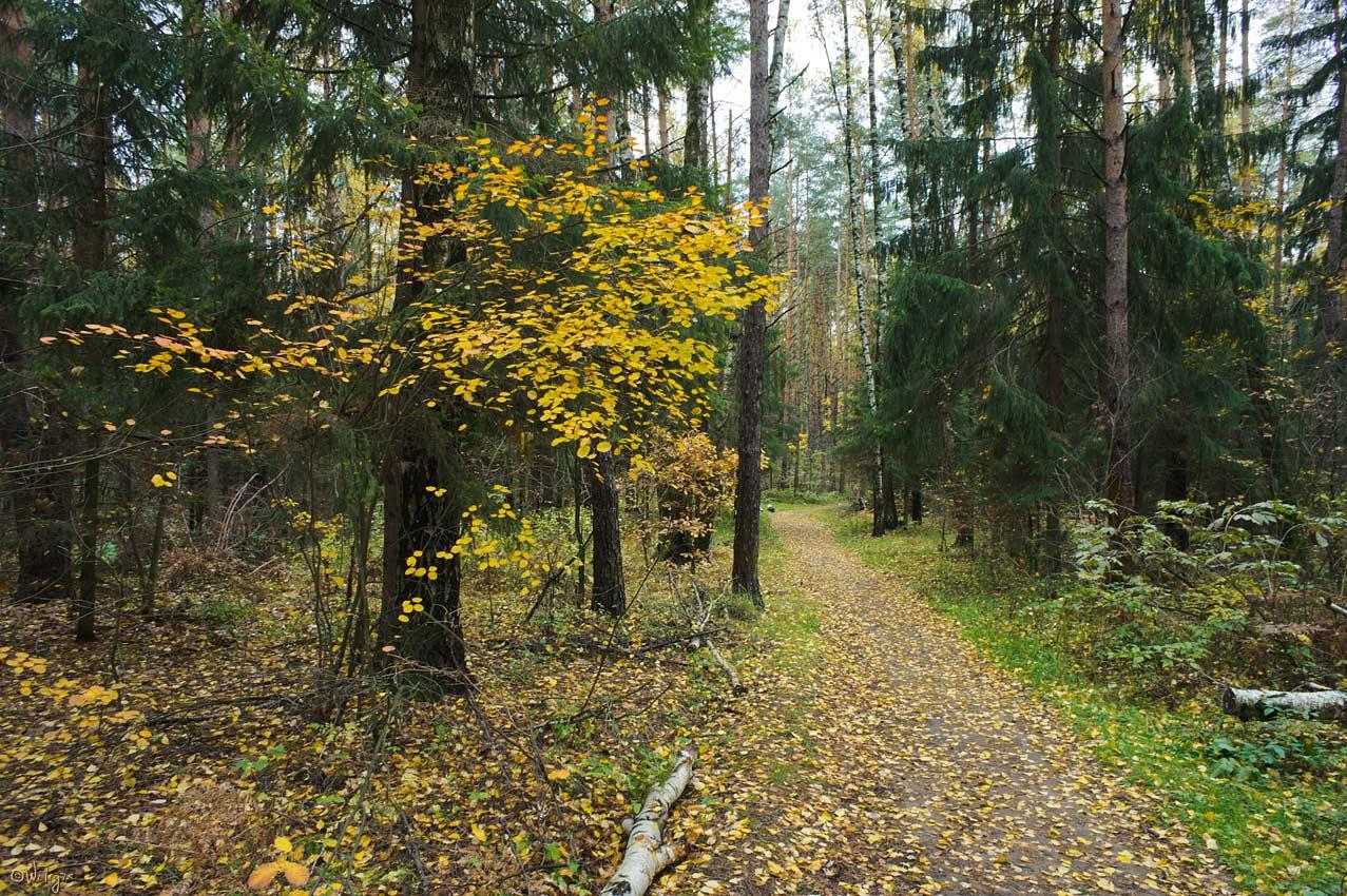 "фото ""Яркие краски грустного леса."" метки: пейзаж, лес, осень"