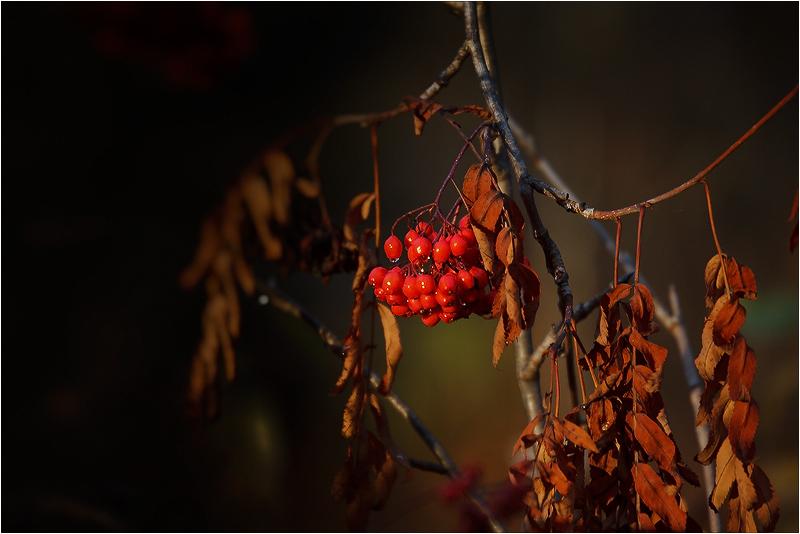 "фото ""Осенняя."" метки: природа, цветы"
