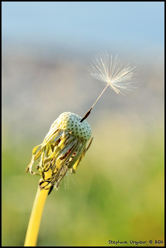 """photo """"Last Hope"""" tags: nature, flowers"""