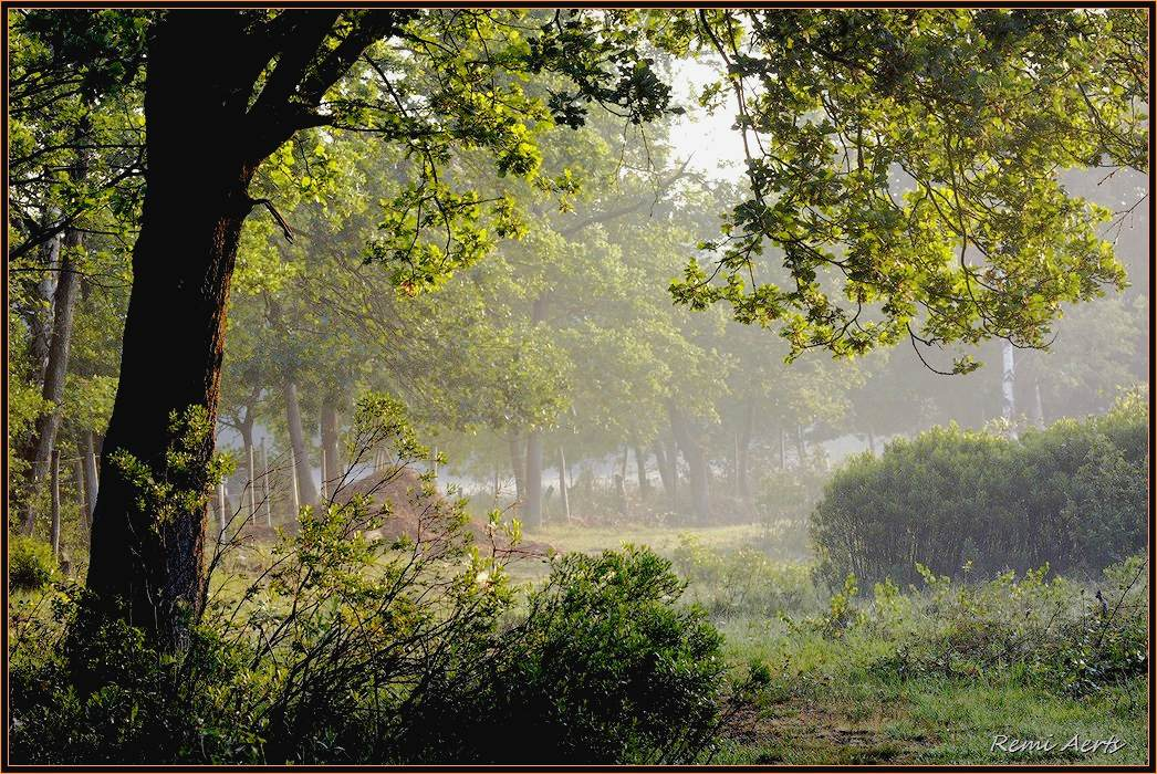 "photo ""still green"" tags: landscape, summer, sunset"