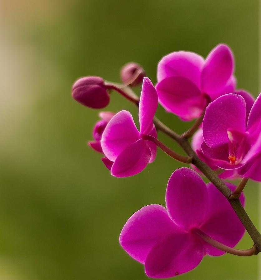 "photo ""cvet 2"" tags: nature,"