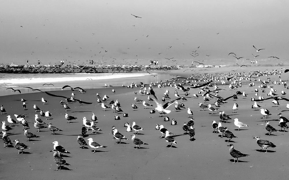 "фото """"Seagulls meeting... on the Beach..."""" метки: природа, дикие животные"