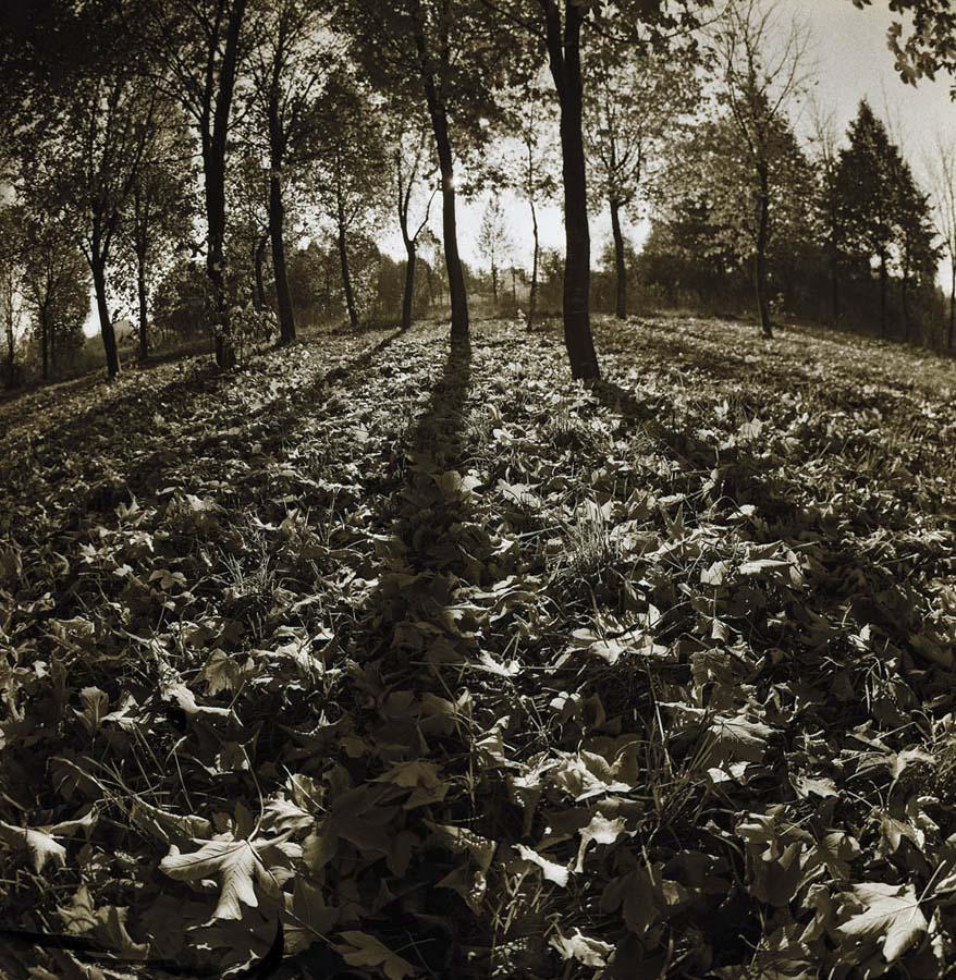 """фото """"Осень"""" метки: пейзаж, лес, осень"""
