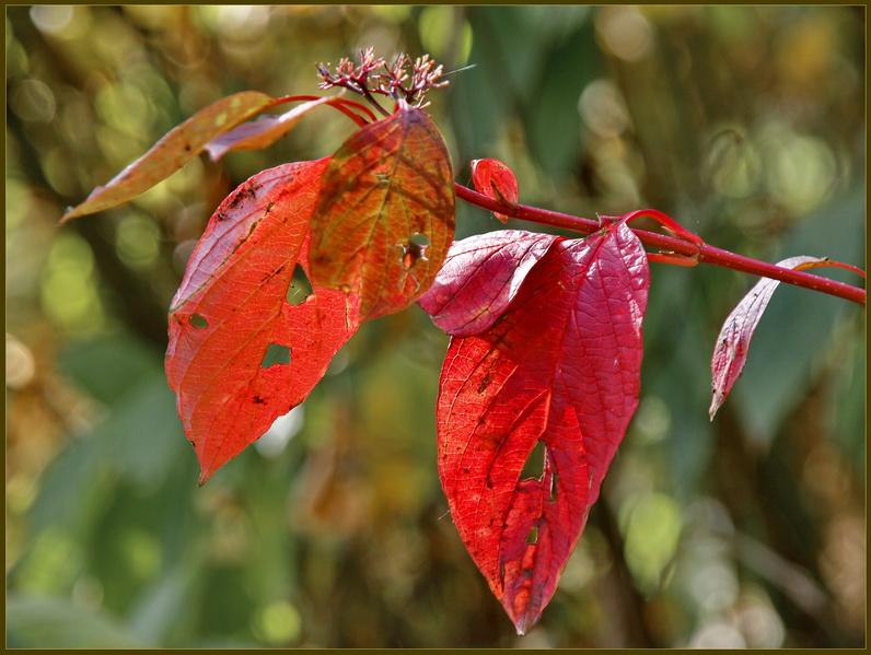 """фото """"Осенний этюд-3"""" метки: пейзаж, осень"""
