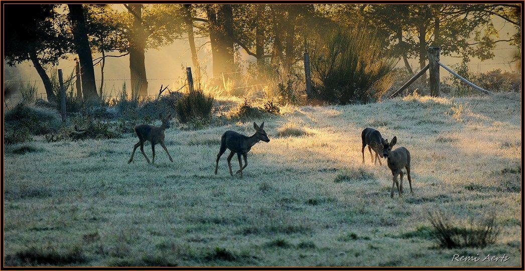 """фото """"seen"""" метки: пейзаж, природа, дикие животные, закат"""