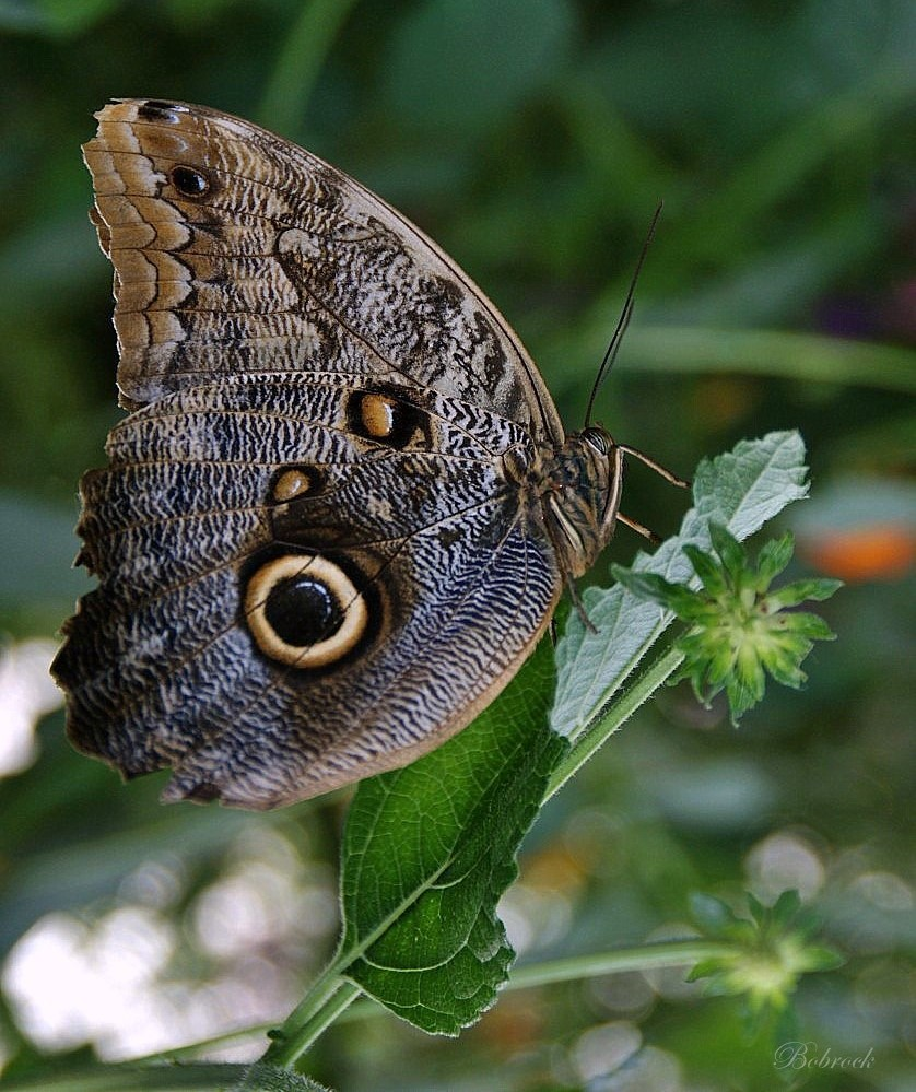 """photo """"butterfly"""" tags: nature, wild animals"""