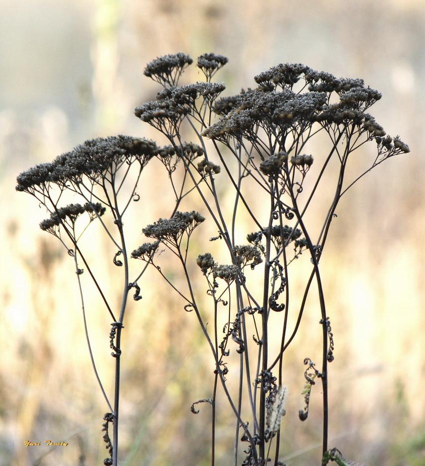 """photo """"Autumn bouquet"""" tags: nature, flowers"""