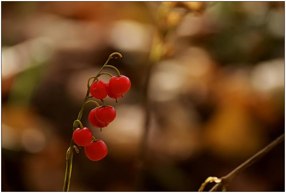 """фото """"Ландыш, но не серебристый :)))"""" метки: макро и крупный план, природа, цветы"""