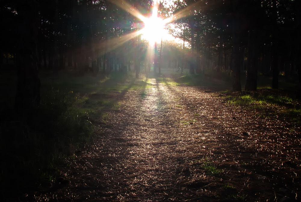 """фото """"Путь"""" метки: пейзаж, лес"""