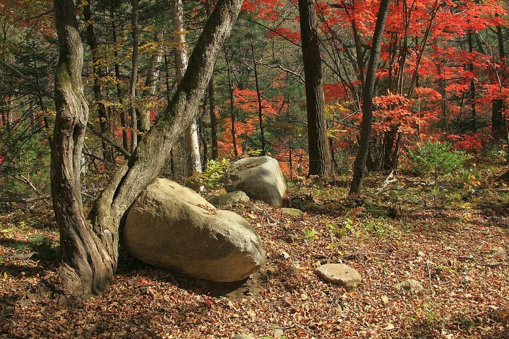 """фото """"Осень нарядит, потом до гола разденет!"""" метки: пейзаж, осень"""