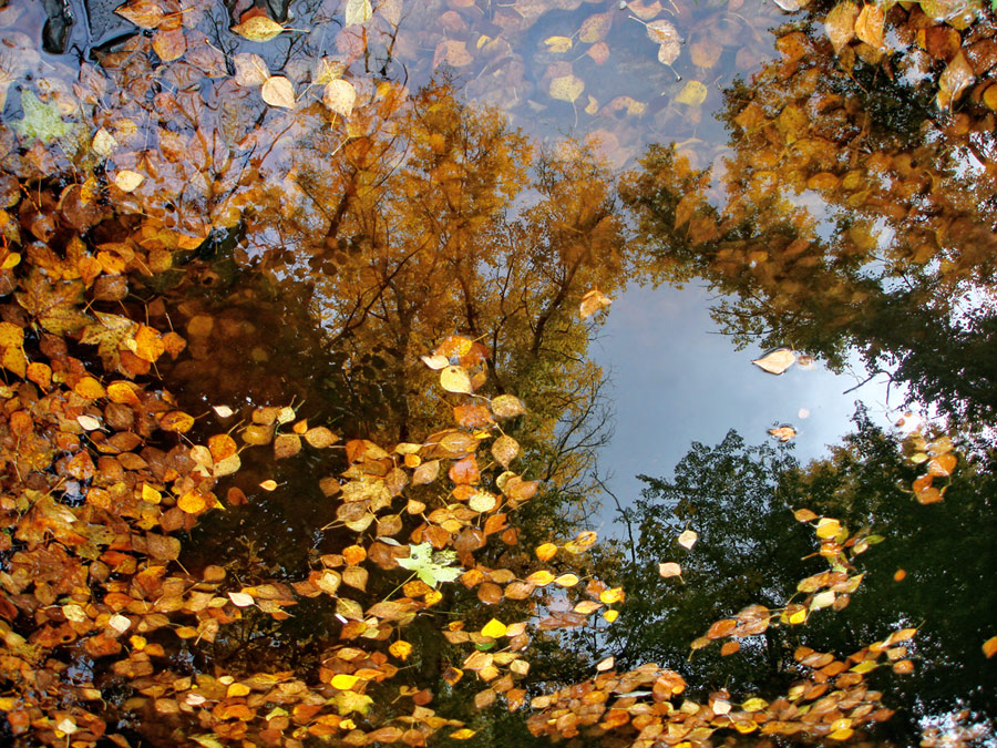 "photo "".. mirror memories .."" tags: landscape, autumn, water"