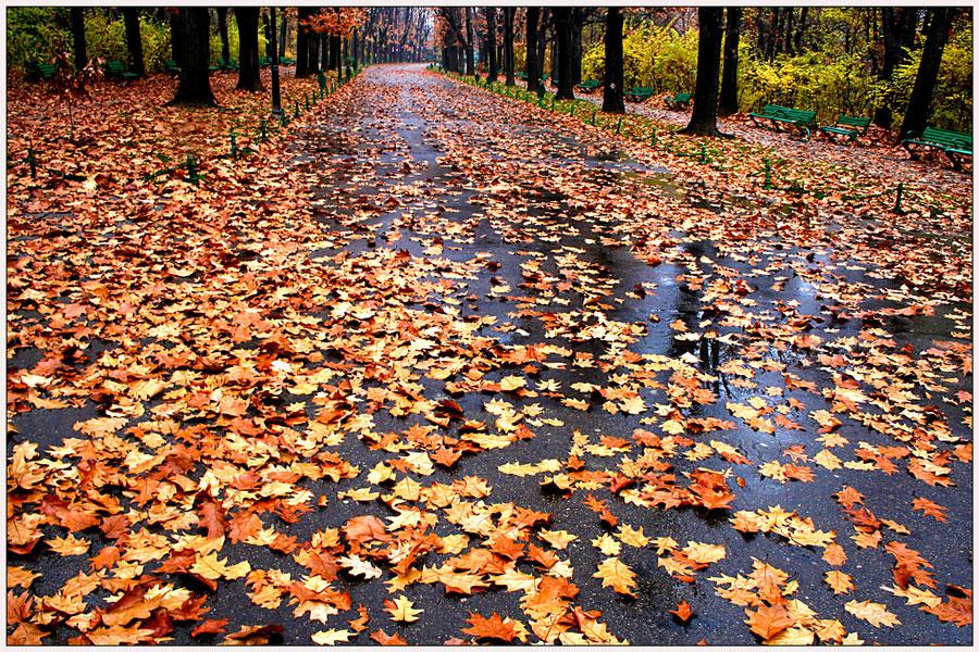 "фото ""Carpet of leaves"" метки: пейзаж, город, leaves, дерево, осень, парк"