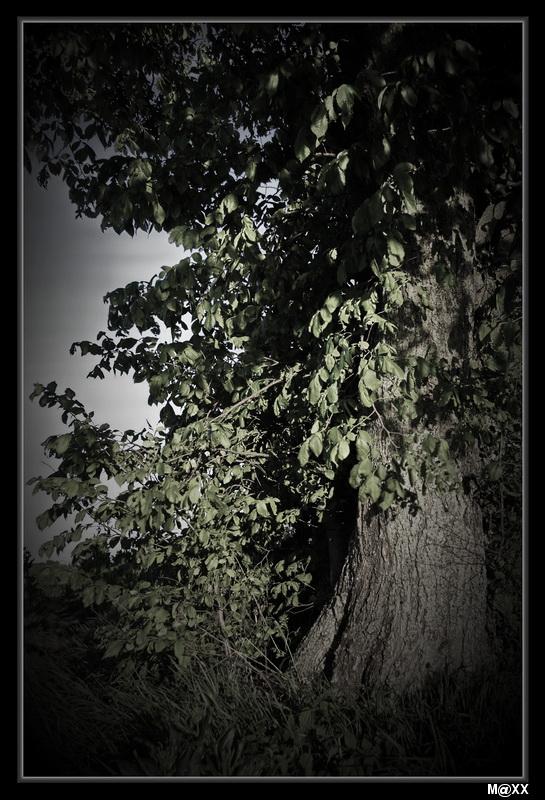 """фото """"***"""" метки: природа, фрагмент,"""