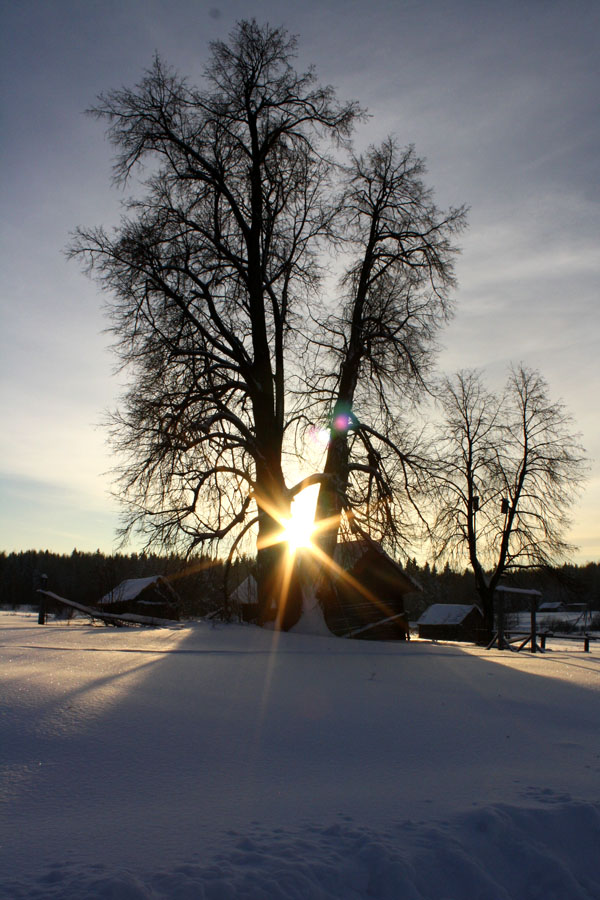 "фото ""грачи улетели"" метки: пейзаж, закат, зима"