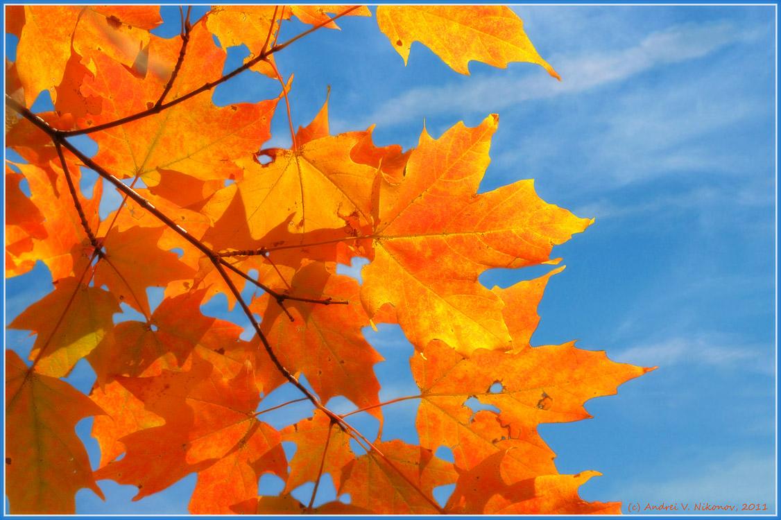 "фото ""Colors of the fall"" метки: пейзаж, природа, Harriman State Park, foliage, осень"