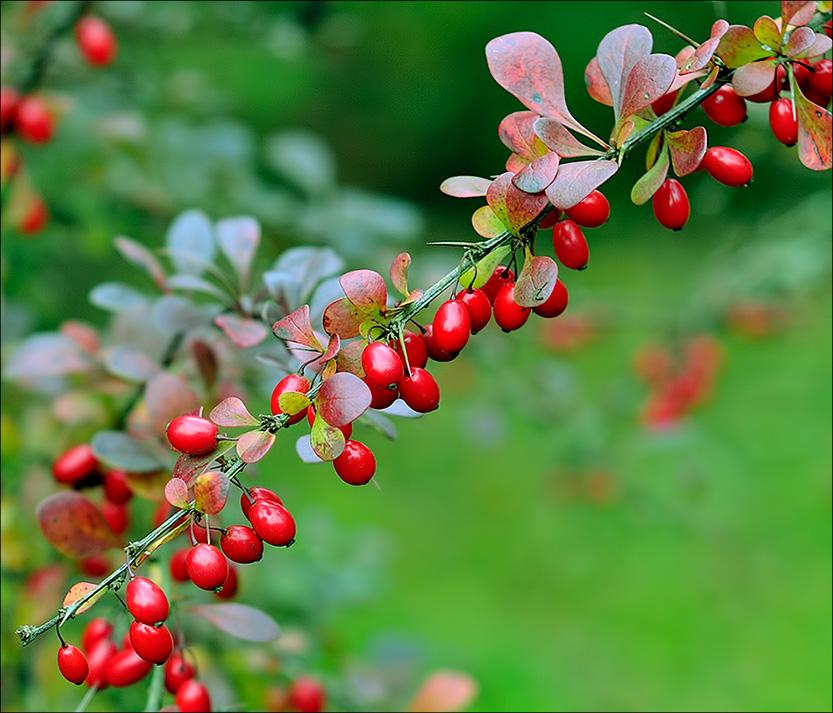 """фото """"Украшения осени"""" метки: пейзаж, осень"""