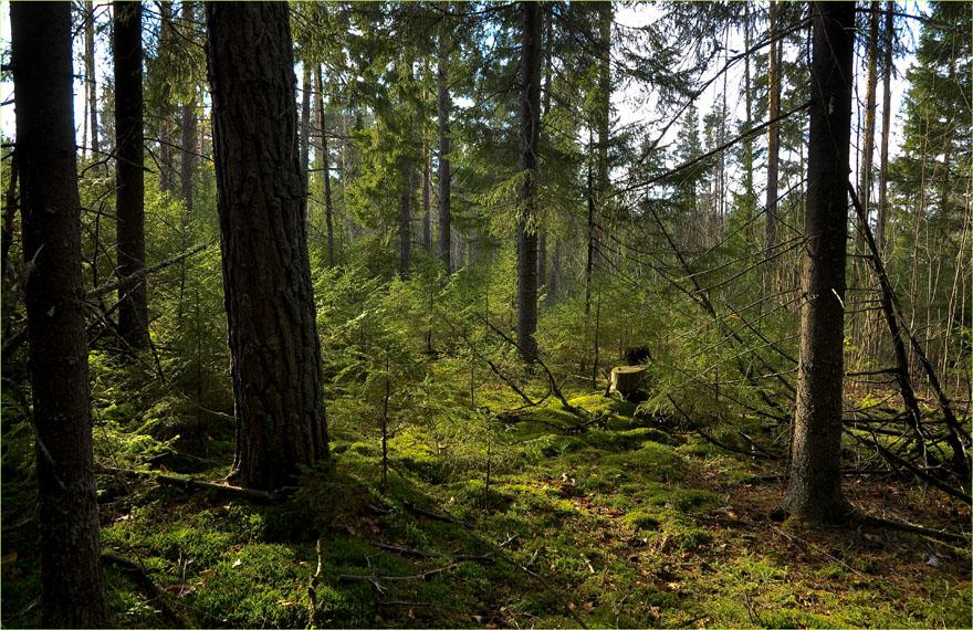 уничтожение леса в берендеевом царстве военной, армейской формы