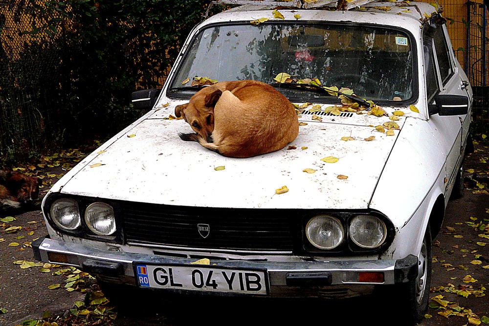 """фото """"Privileged position"""" метки: репортаж, разное, домашние животные"""
