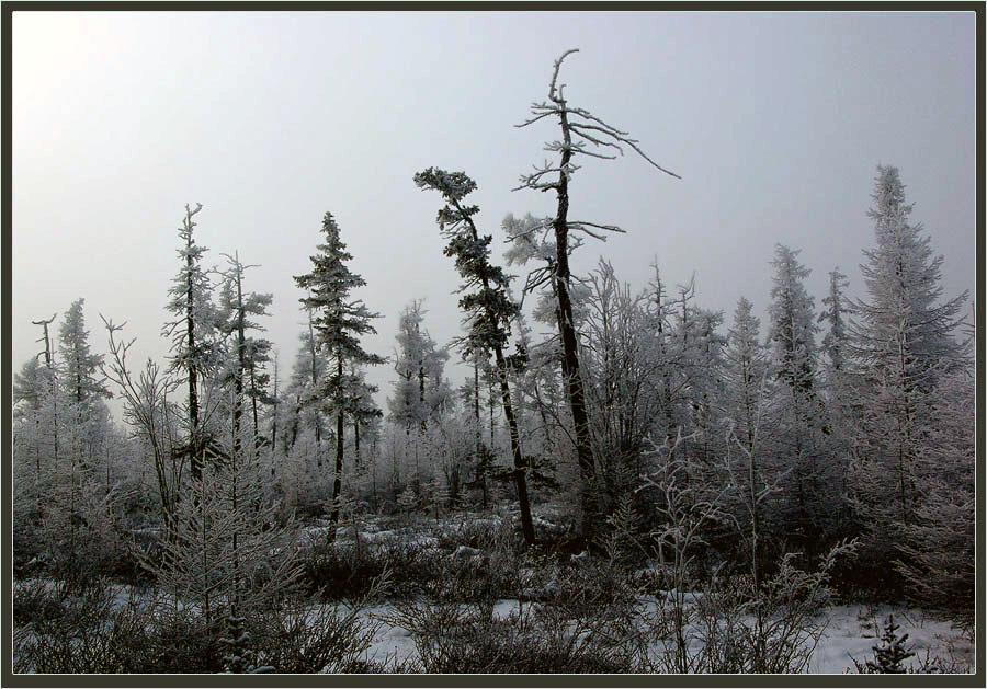"""фото """"Октябрь в Приполярье"""" метки: пейзаж, зима, лес"""