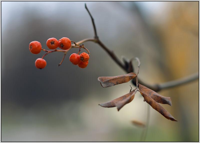 """фото """"..."""" метки: природа, цветы"""