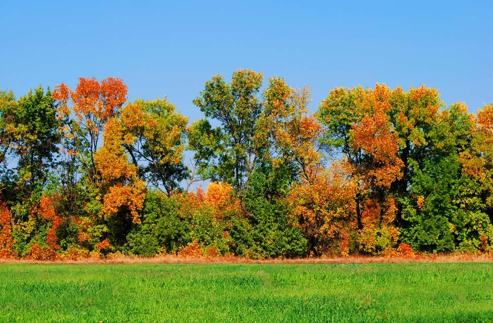 """фото """"Поздней осени багрянец..."""" метки: пейзаж, лес, осень"""