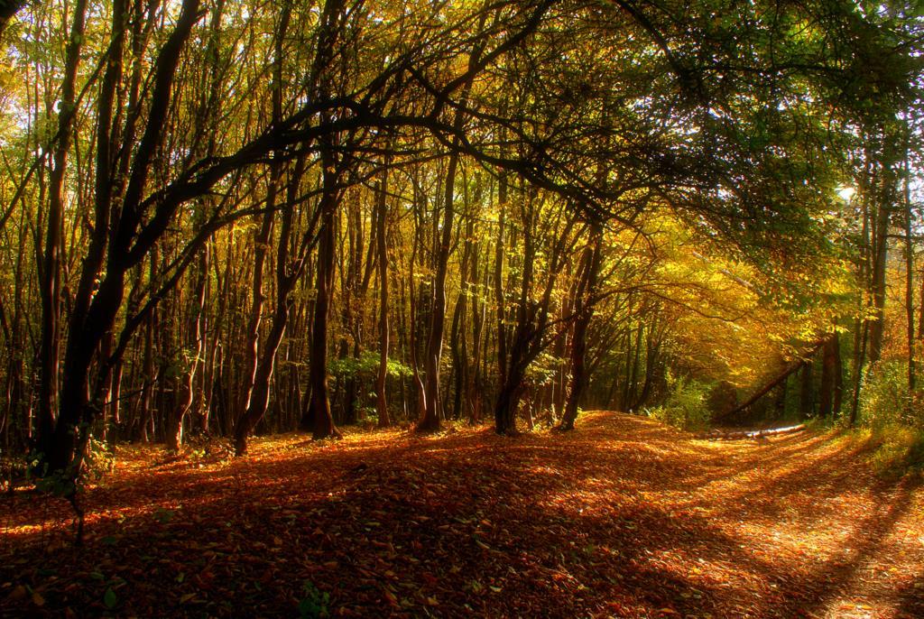"""фото """"*"""" метки: пейзаж, лес"""