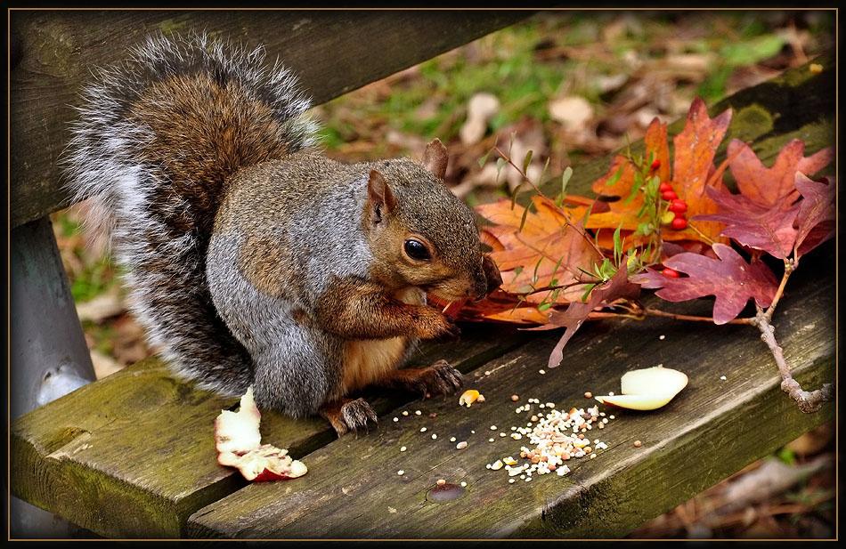 """фото """"Ручная белка"""" метки: природа, дикие животные"""