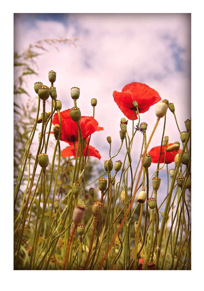 """фото """"Воспоминание"""" метки: природа, пейзаж, лето, цветы"""