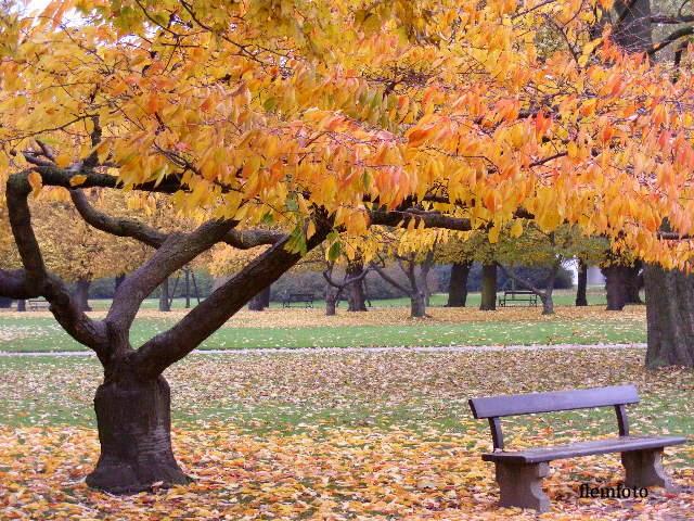 "фото ""Autumn"" метки: природа, цветы"