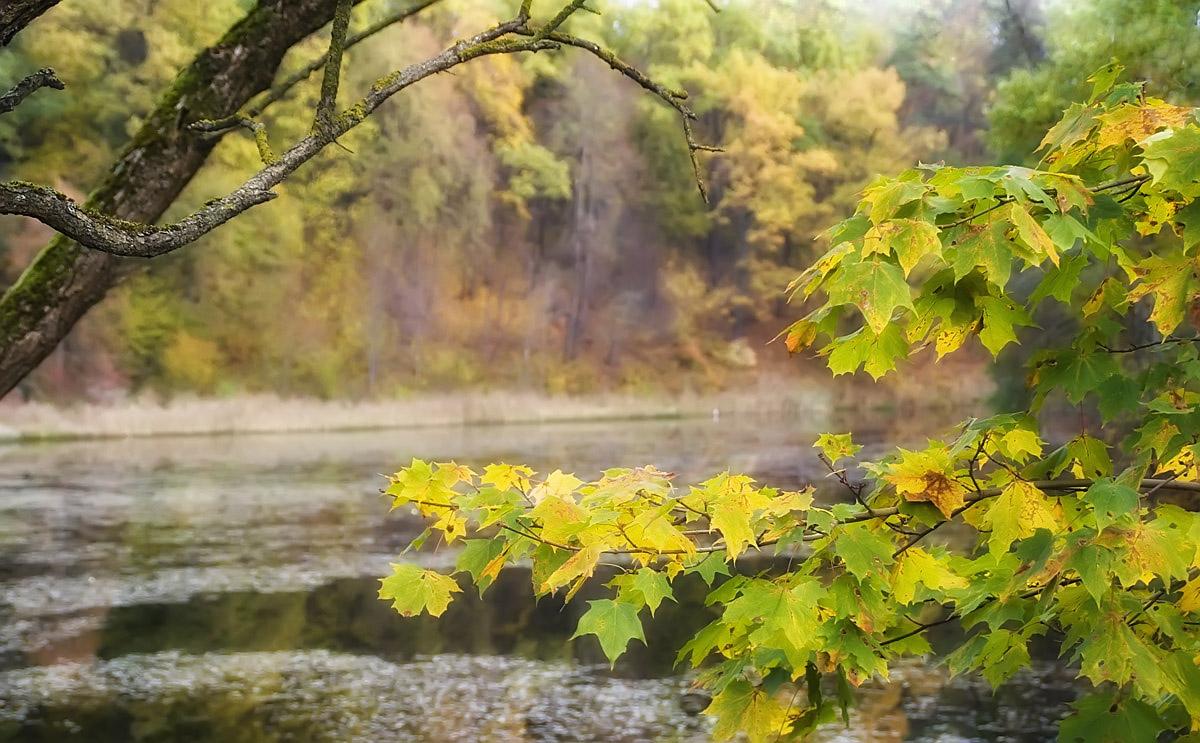 "фото ""Осенний свет"" метки: природа, пейзаж, осень"